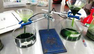 Estudiantes poblanas elaboran bebida antioxidante de pitaya y pipicha
