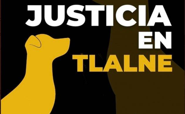 Exigen justicia por perro que murió a golpes en Tlalnepantla; llaman a marcha