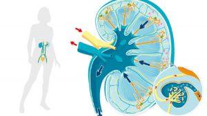 Estos son los jugos naturales que le ayudarán a limpiar sus riñones